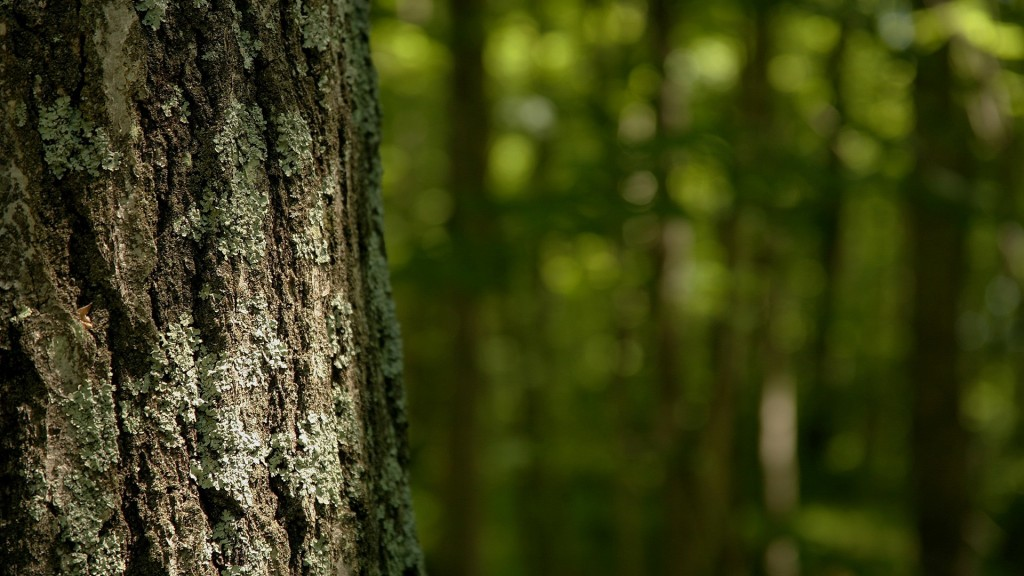 tree bark wallpapers