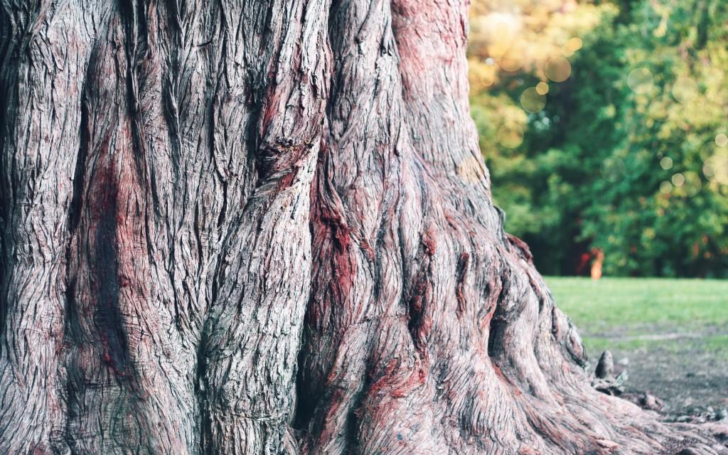 tree-bark-26075-26760-hd-wallpapers