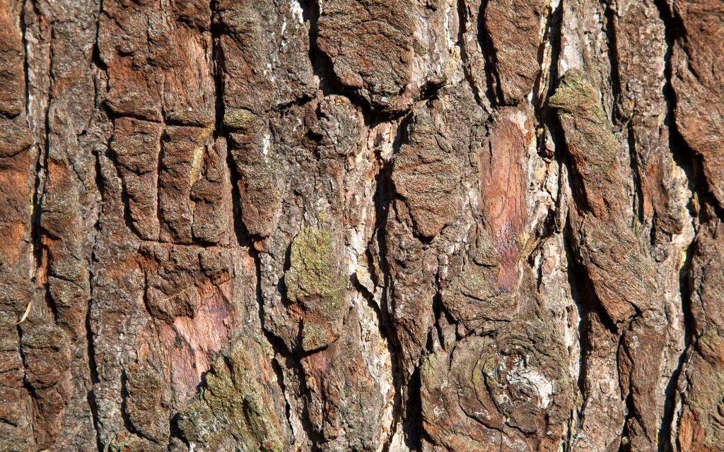 tree-bark-desktop-wallpaper-49763-51442-hd-wallpapers