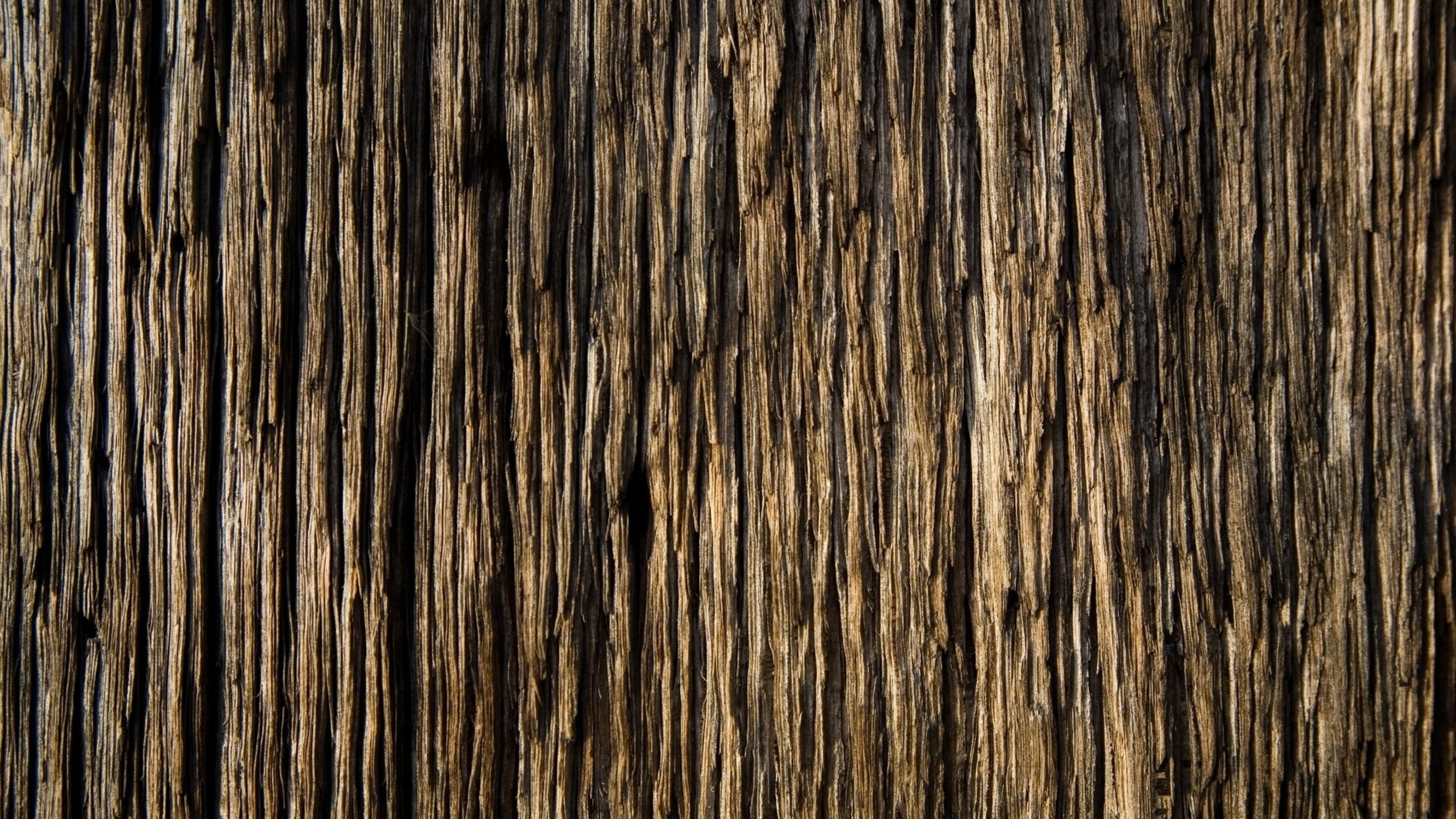 17 Fantastic HD Tree Bark Wallpapers