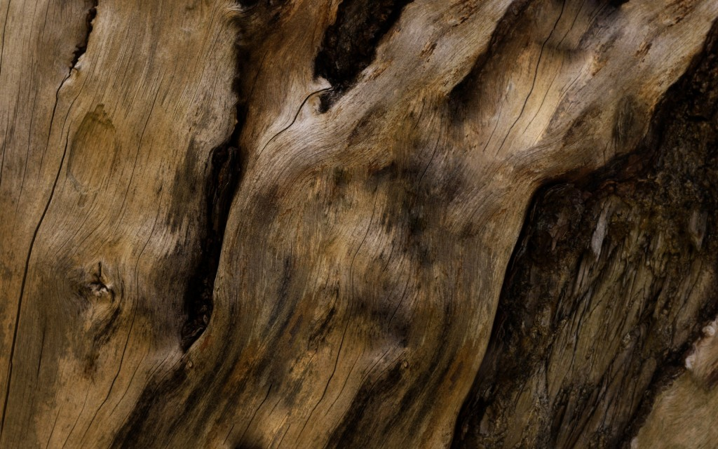tree-bark-wallpaper-background-49762-51441-hd-wallpapers