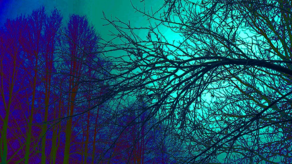 trippy-trees-wallpaper-50037-51724-hd-wallpapers