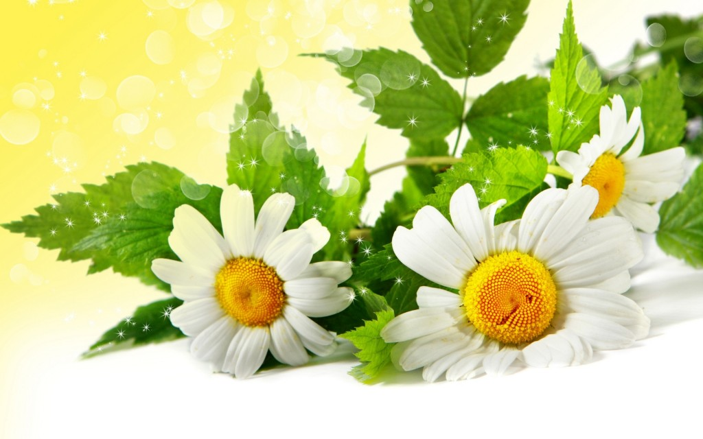 chamomile-wallpaper-20226-20735-hd-wallpapers