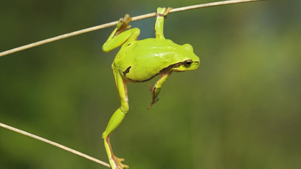 cool-green-frog-wallpaper-33415-34172-hd-wallpapers
