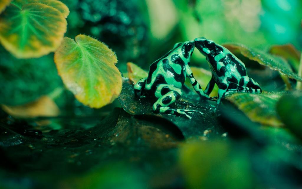 cute-frog-wallpaper-44316-45435-hd-wallpapers