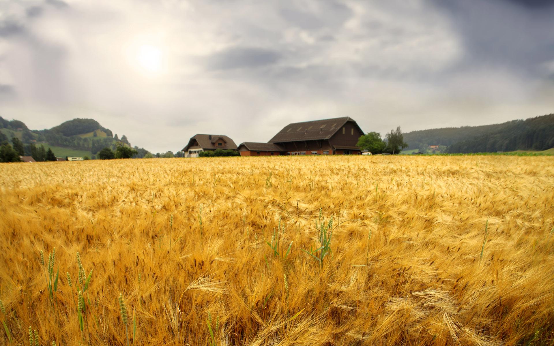 The farmer cultivates land wallpaper - Farm animals - Nature ...