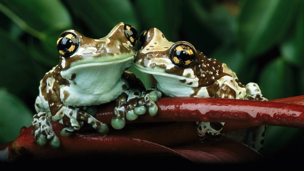 frog-wallpaper-50805-52498-hd-wallpapers