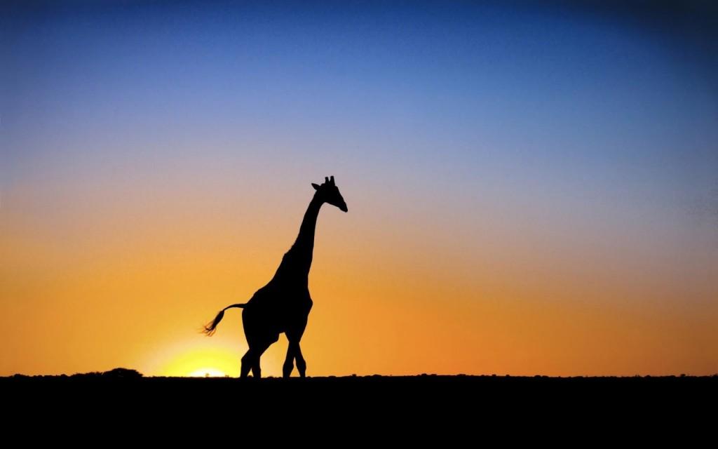 giraffe-silhouette-wallpaper-50166-51853-hd-wallpapers