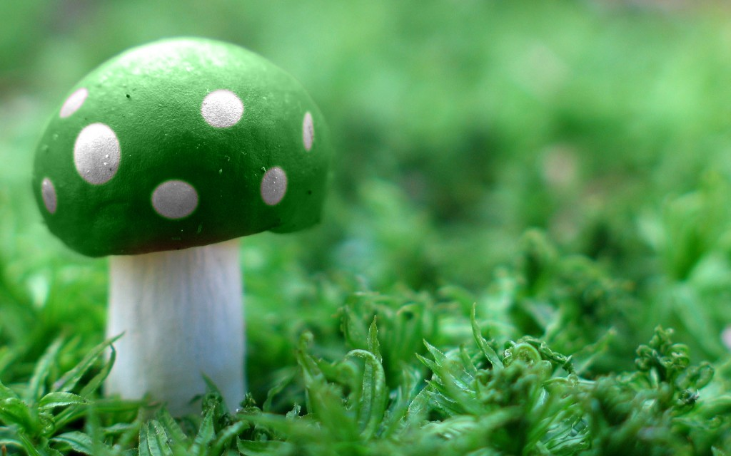 green-mushroom-wallpaper-27503-28220-hd-wallpapers