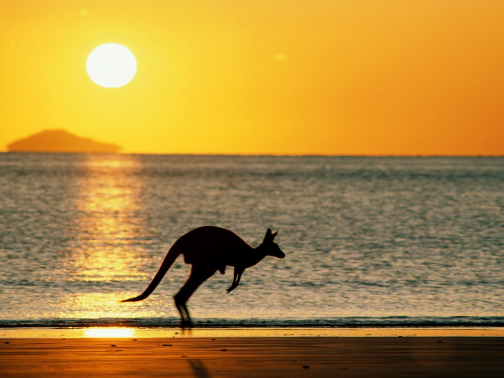 kangaroo-wallpaper-23904-24560-hd-wallpapers