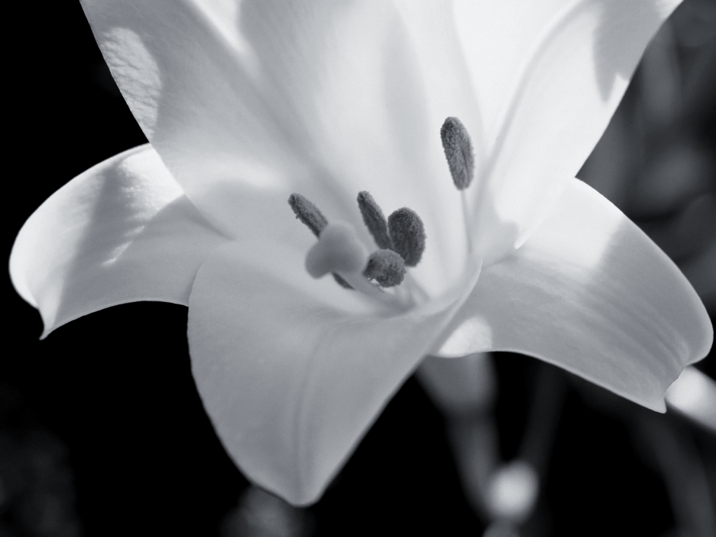 lily-flowers-30782-31505-hd-wallpapers.jpg