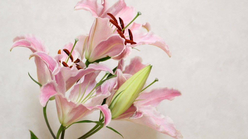 lily-flowers-wide-wallpaper-50635-52327-hd-wallpapers