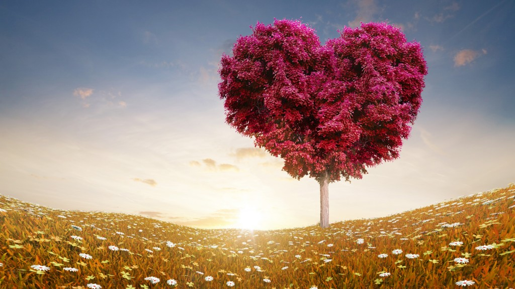 love-heart-tree-wide-wallpaper-50423-52114-hd-wallpapers
