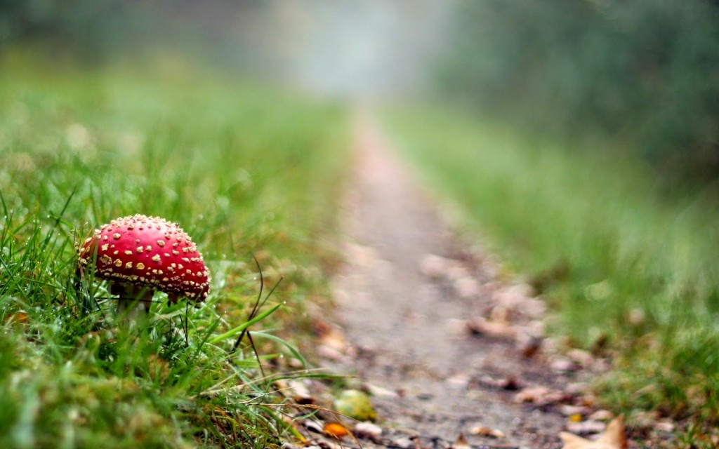 mushroom photography wallpapers