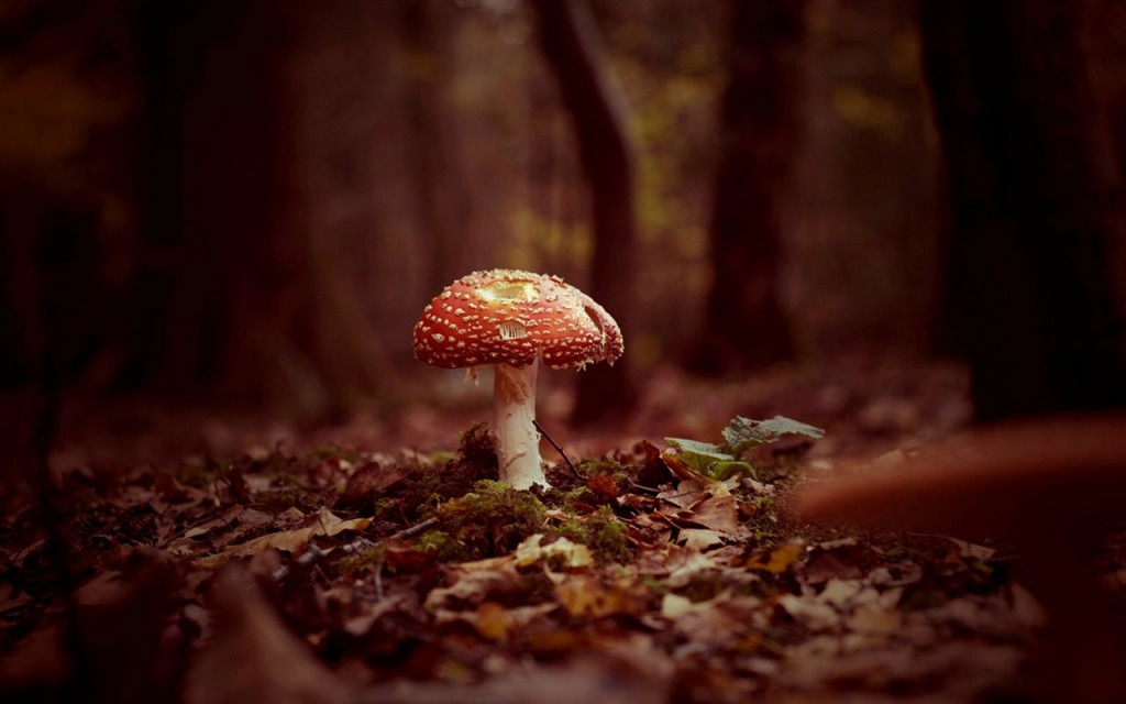 mushroom-wallpaper-27494-28211-hd-wallpapers