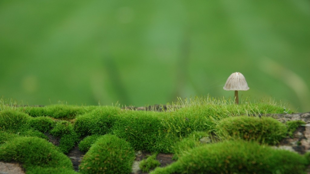 mushroom pictures wallpapers