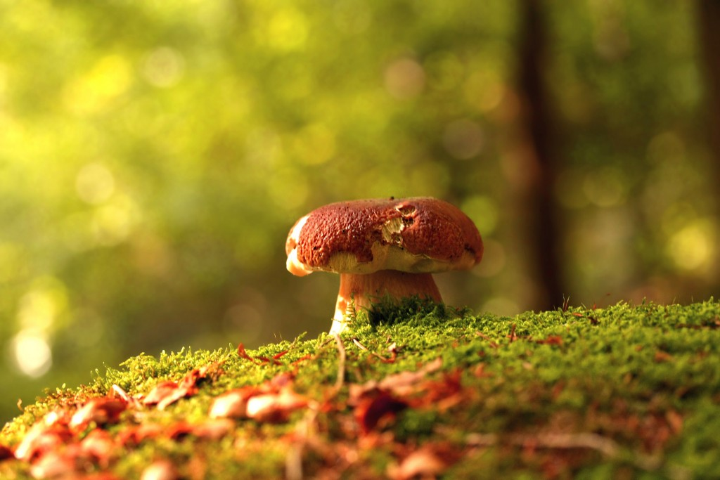 mushrooms-27513-28230-hd-wallpapers