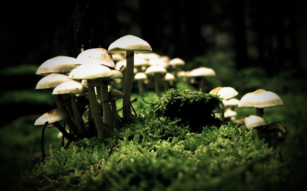 white mushroom wallpapers