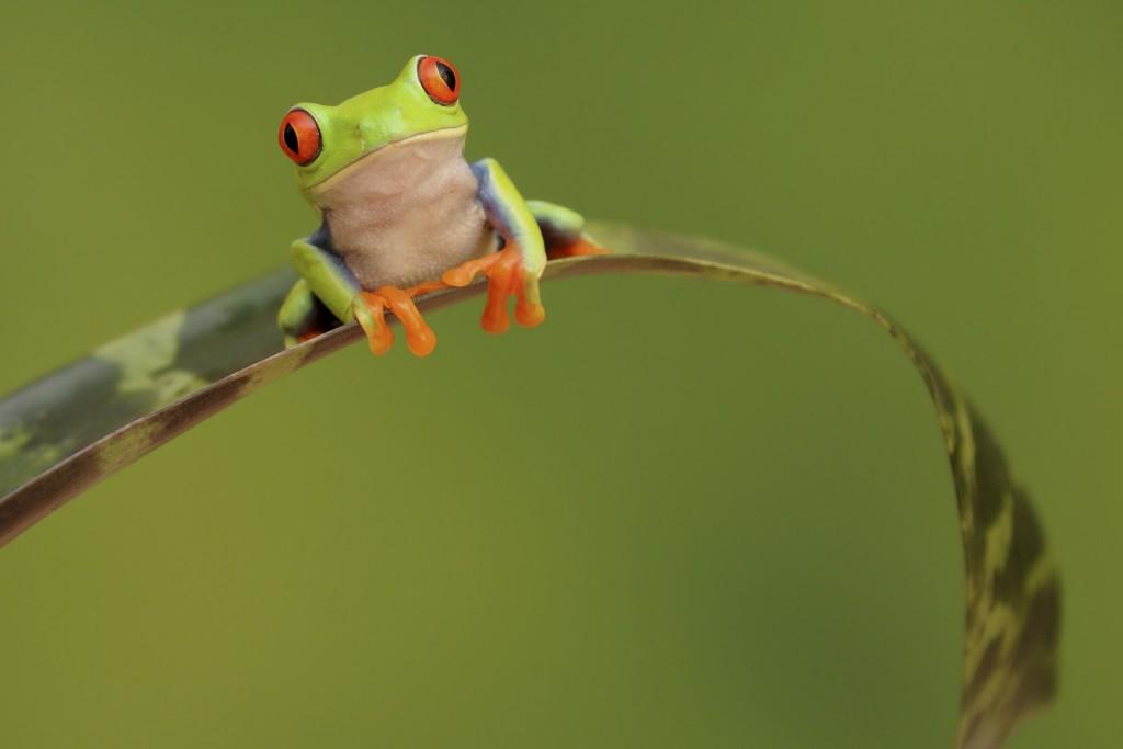 wonderful-frog-wallpaper-44317-45436-hd-wallpapers