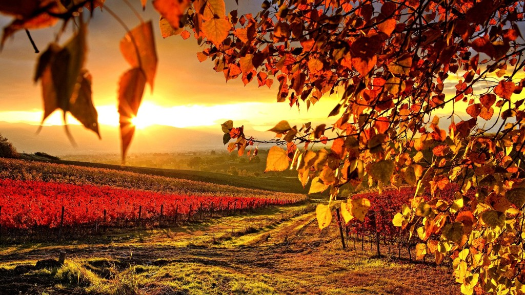 beautiful vineyard wallpapers