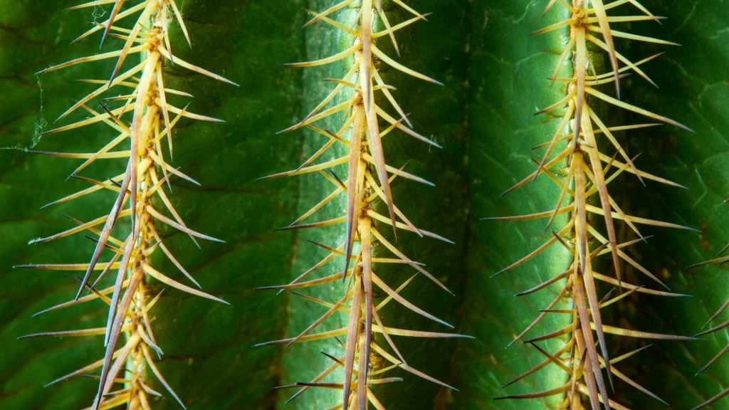 cactus texture desktop wallpapers