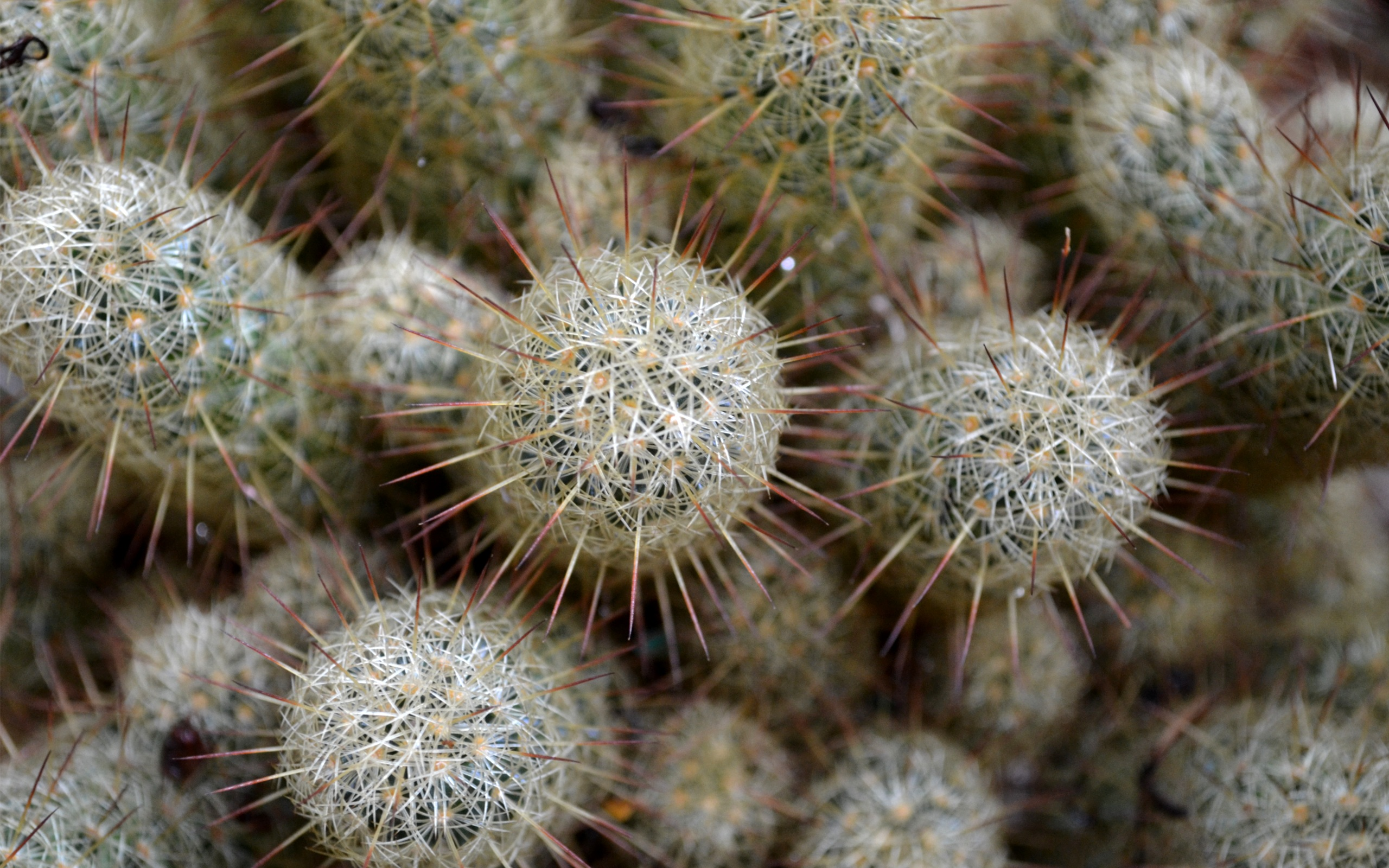 hd cactus wallpapers - photo #8