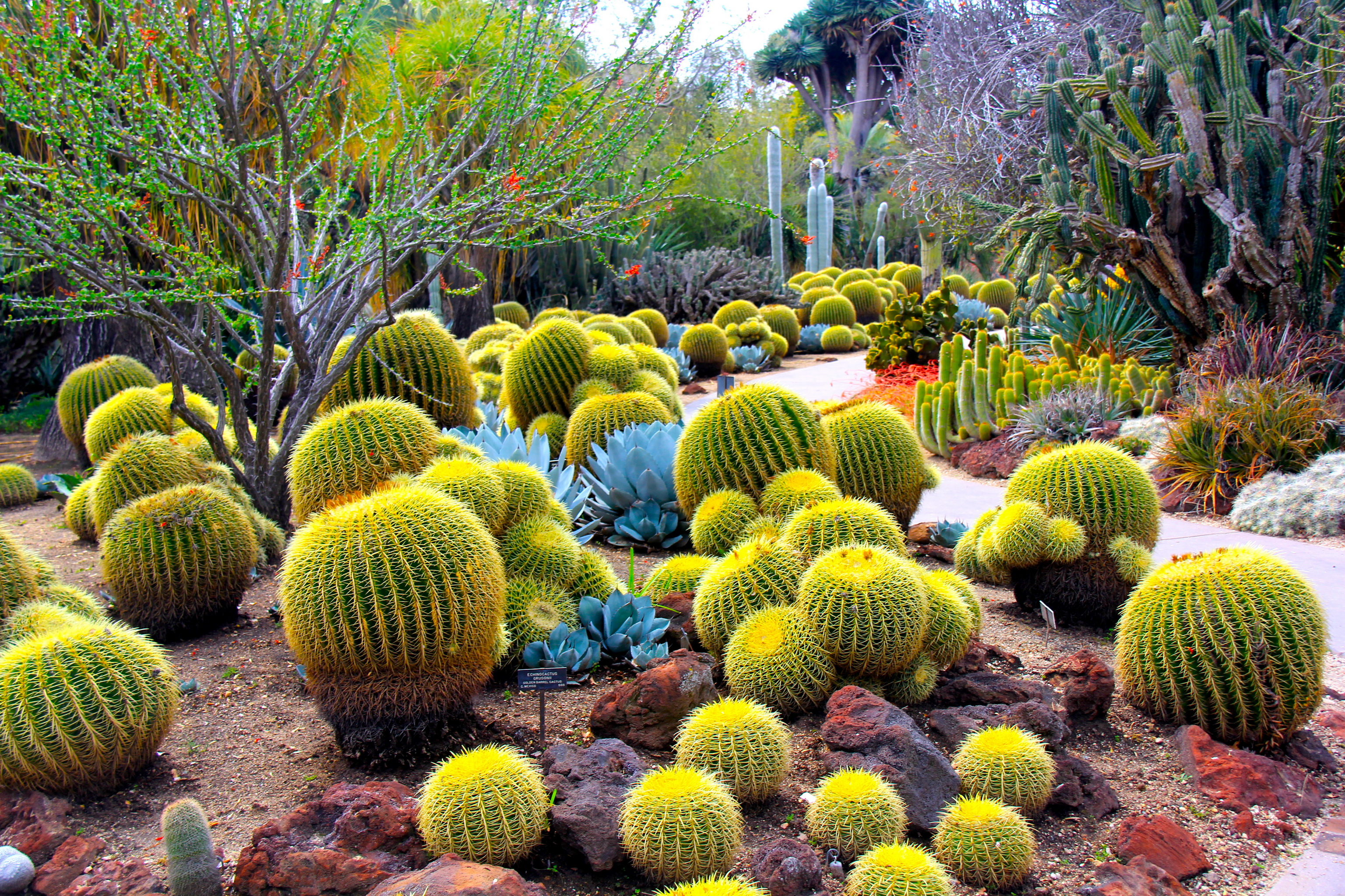 hd cactus wallpapers - photo #4