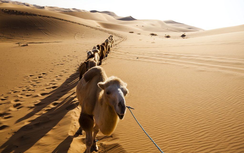 camel widescreen wallpapers