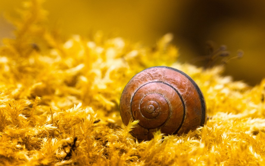 cute-snail-wallpaper-35680-36493-hd-wallpapers