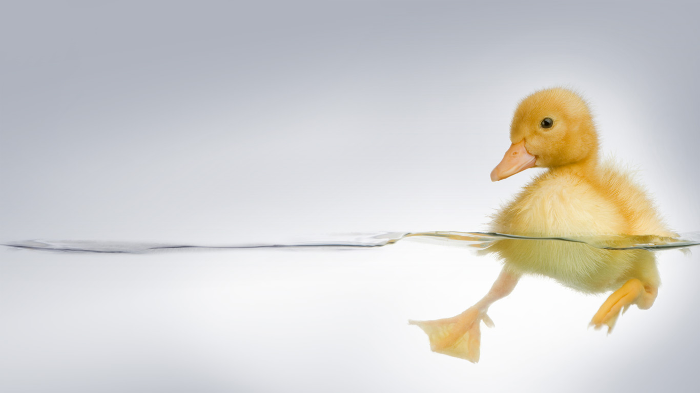 18 adorable hd duckling wallpapers hdwallsourcecom