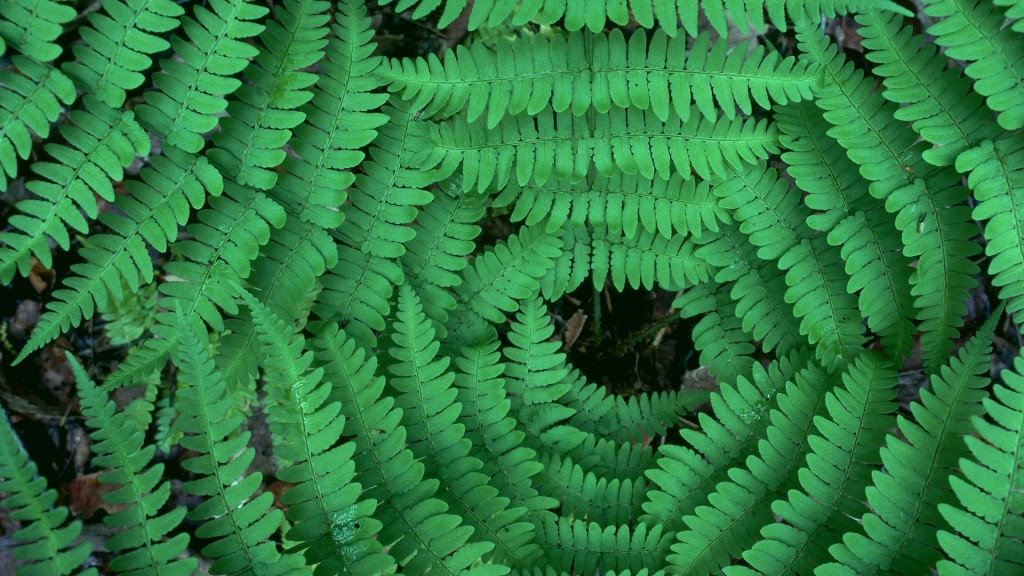 fern desktop wallpapers