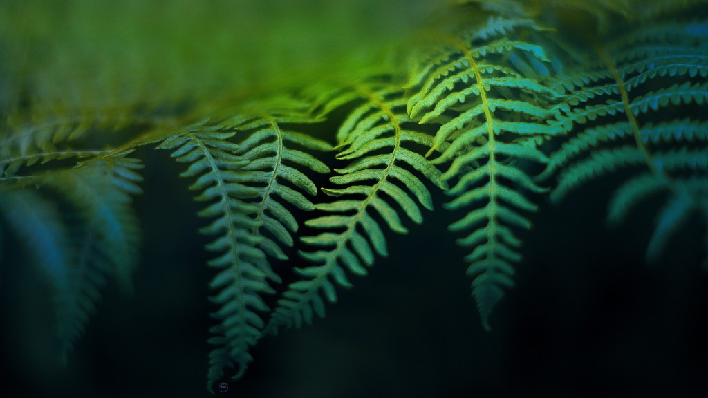 fern background wallpapers