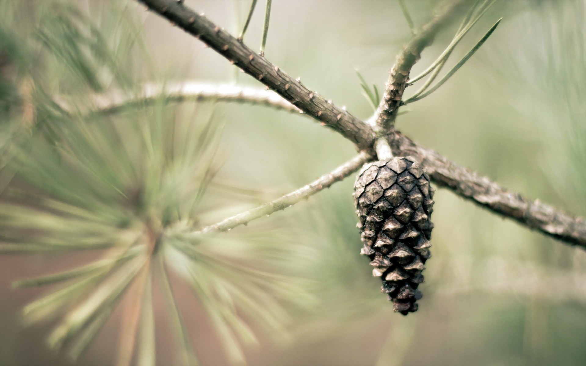 Pine Cone Wallpapers Archives