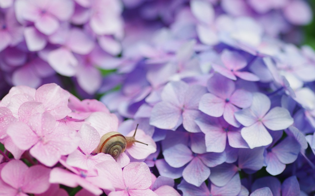 pretty-snail-wallpaper-35694-36508-hd-wallpapers