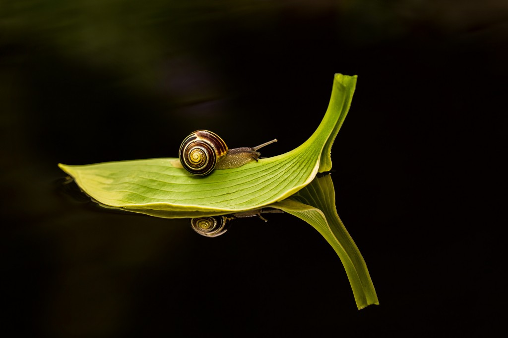 snail desktop wallpapers