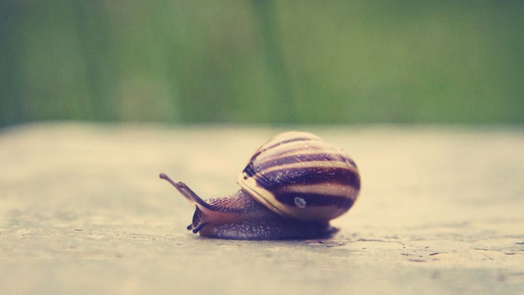 snail-wallpaper-35676-36489-hd-wallpapers