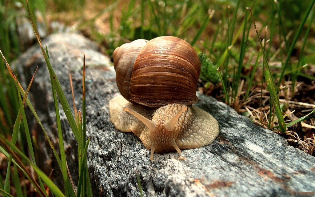 snail-wallpaper-35677-36490-hd-wallpapers
