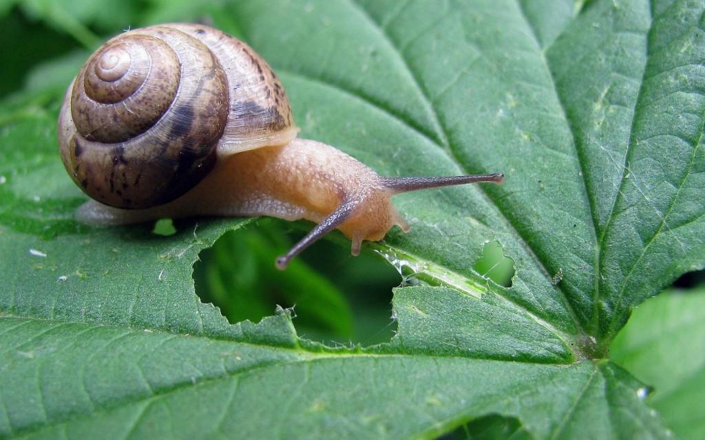 snail-wallpaper-35681-36494-hd-wallpapers
