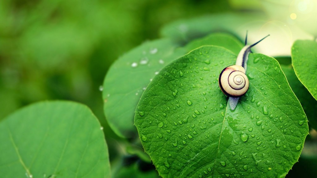 snail-wallpaper-hd-35686-36500-hd-wallpapers