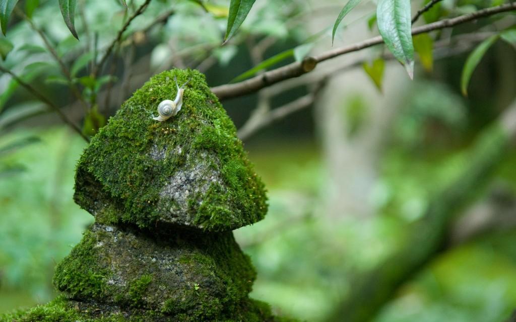 Snail Nature