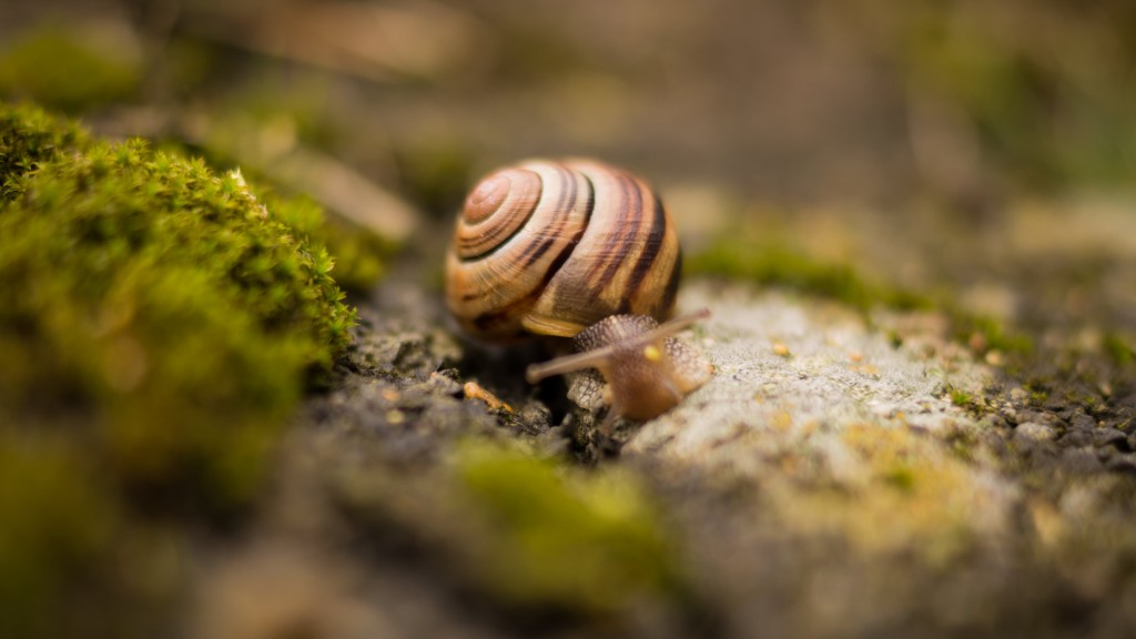 snail wide wallpapers