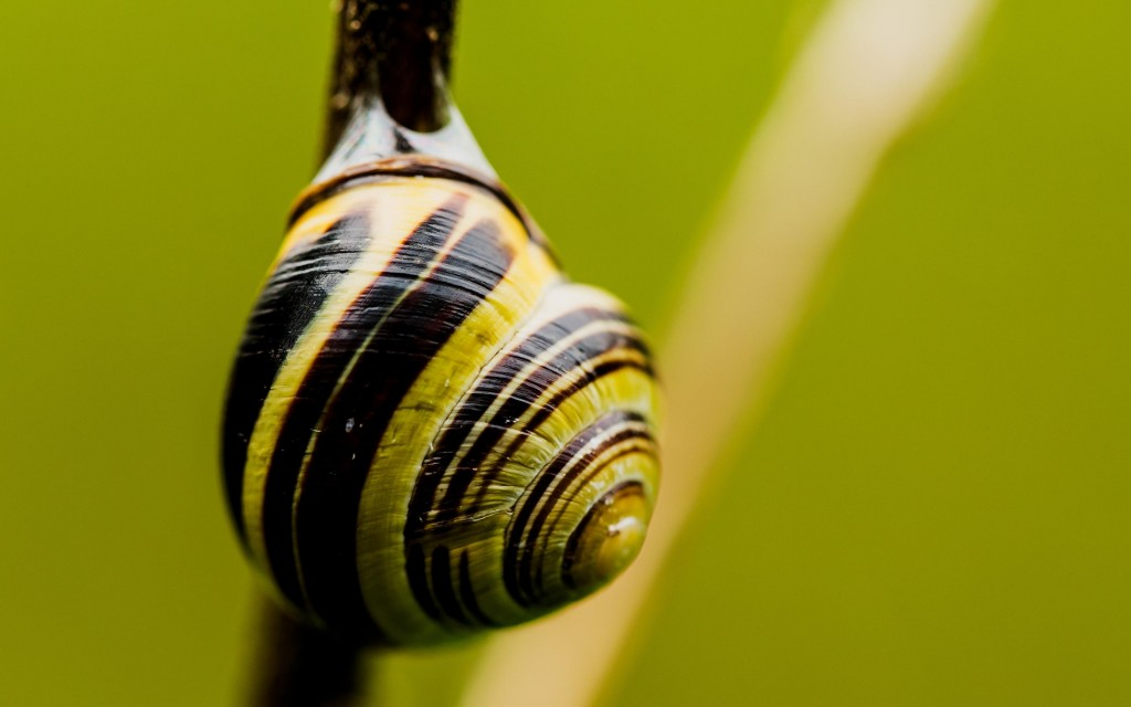 snail-widescreen-wallpaper-51231-52927-hd-wallpapers
