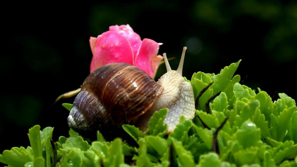 snail-widescreen-wallpaper-51245-52941-hd-wallpapers