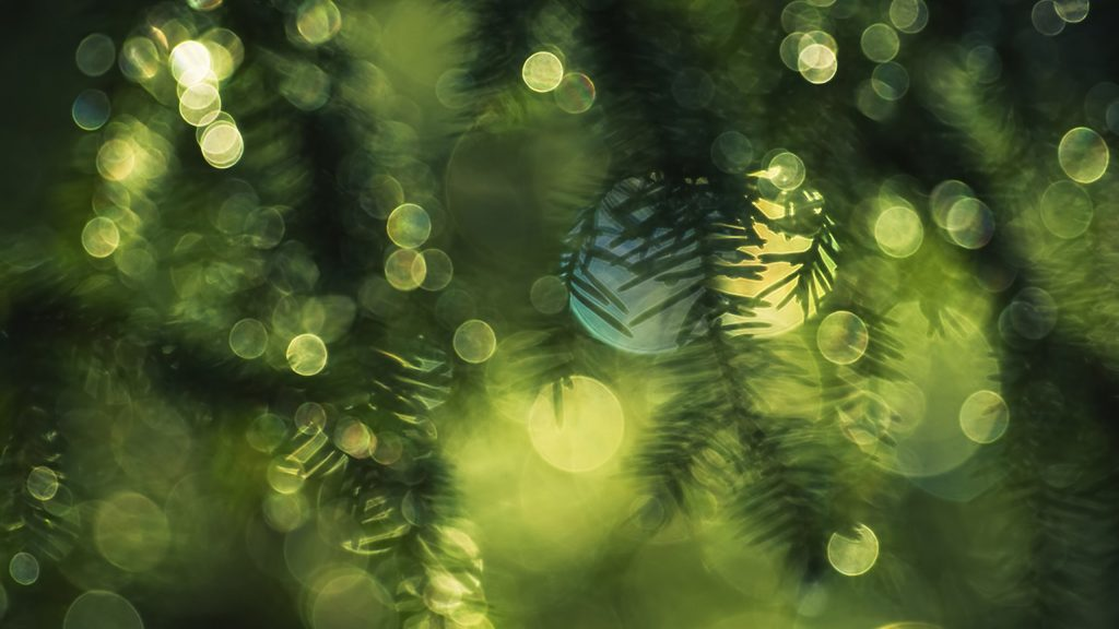 spruce blur wide wallpapers