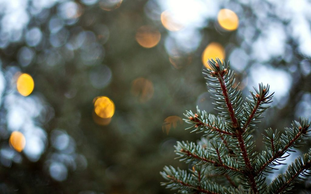 spruce bokeh wallpapers