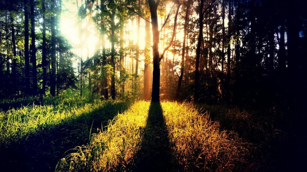 sunbeam-background-31313-32046-hd-wallpapers