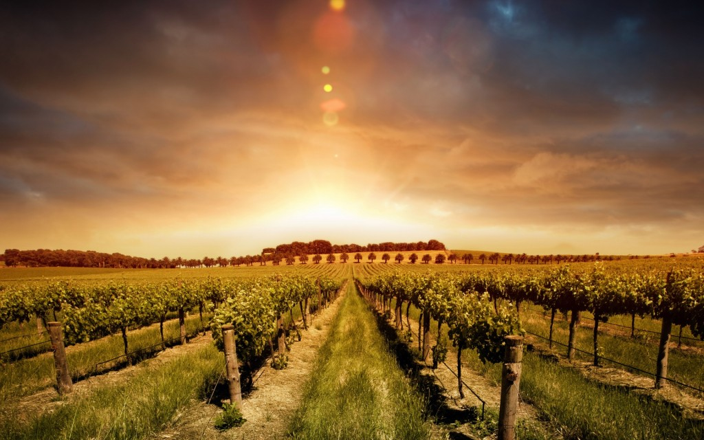 vineyard wallpapers