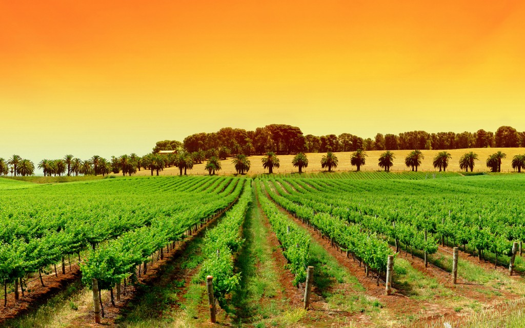 vineyard background wallpapers