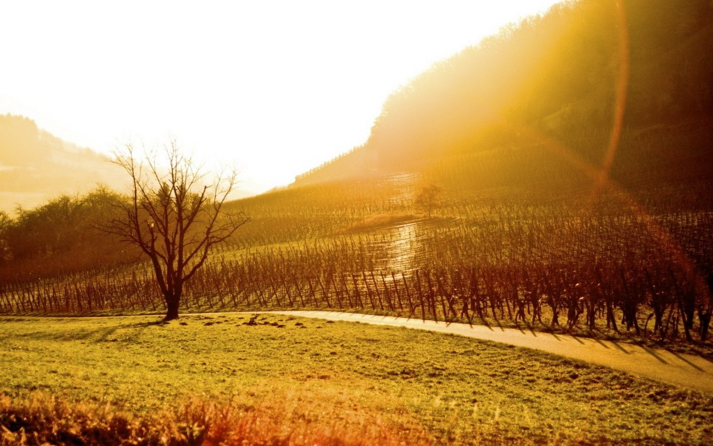 vineyard desktop wallpapers