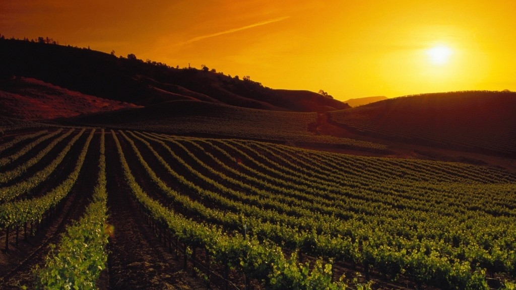 vineyard sunset wallpapers